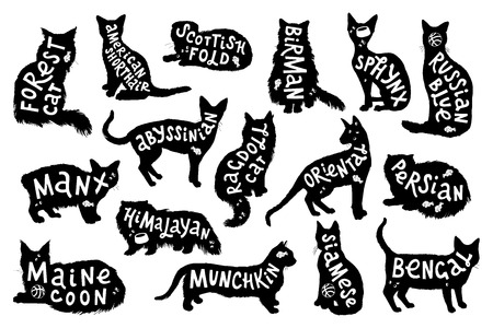 16 hand drawn lettering with breeds in cats silhouettes. Vector illustration Ilustração