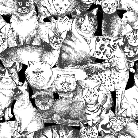 Monochrome seamless pattern with 16 hand drawn purebred cats. Vector illustration