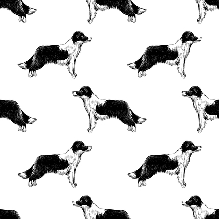 Seamless pattern with border collies Illustration