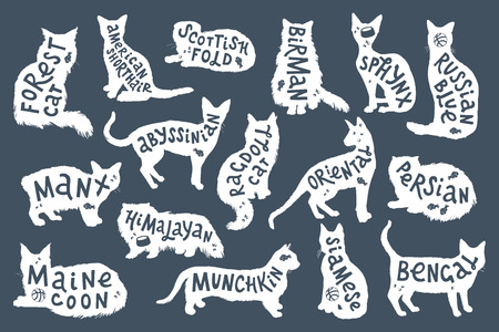 16 hand drawn lettering with breeds in cats silhouettes. Vector illustration Illustration