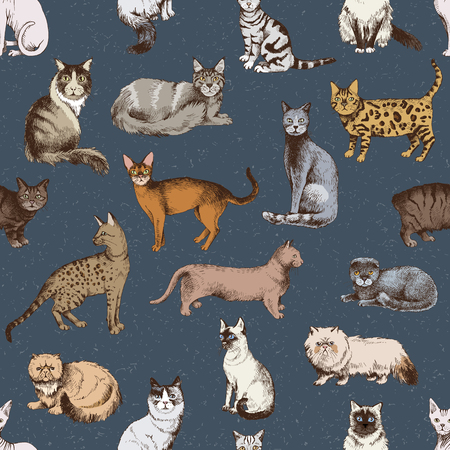 Seamless pattern with 16 hand drawn colorful purebred cats on dark background. Vector illustration