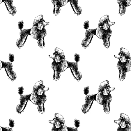 Seamless pattern with hand drawn poodles. Vector illustration in retro style Illusztráció