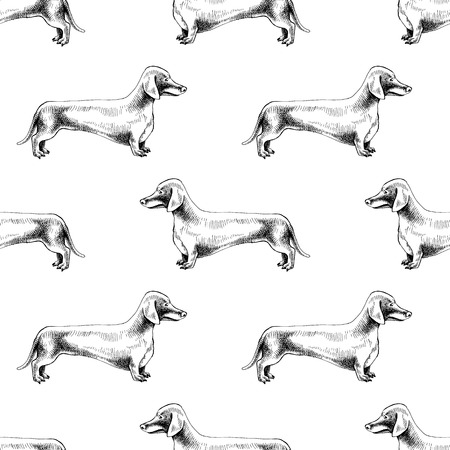 Seamless pattern with hand drawn dachshunds
