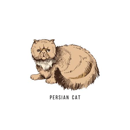 Hand drawn persian cat Иллюстрация