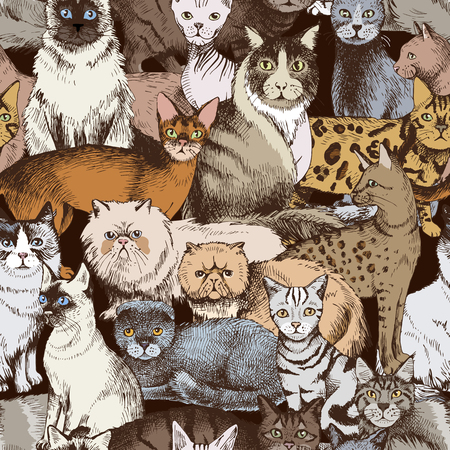 Seamless pattern with 16 colorful hand drawn purebred cats. Vector illustration Vektorové ilustrace