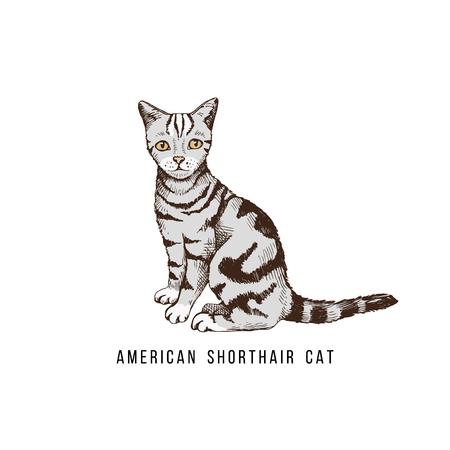 Hand drawn American Shorthair cat Banco de Imagens