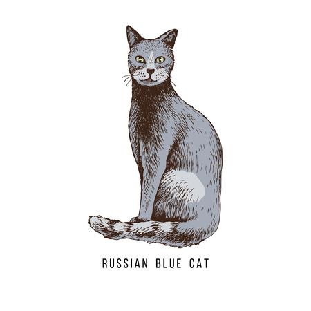 Hand drawn russian blue cat Banco de Imagens