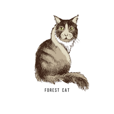 Hand drawn forest cat Stock Photo