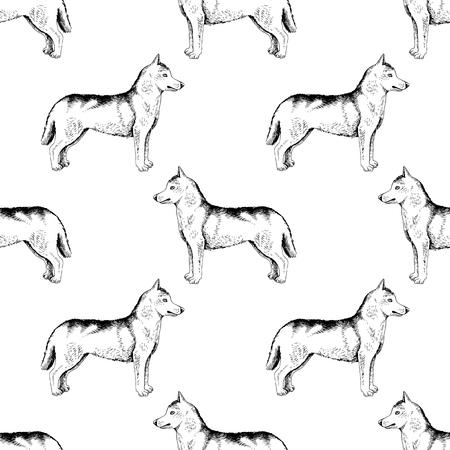 Seamless pattern with hand drawn siberian huskies Stock Photo