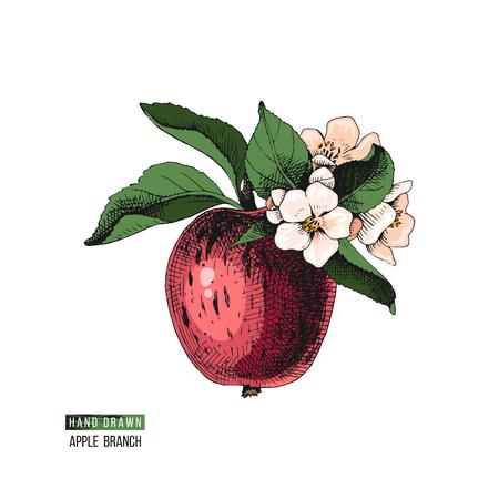 Flowering apple branch  イラスト・ベクター素材