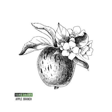 Hand drawn black and white flowering apple branch. Vector illustration
