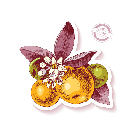 Sticker with hand drawn colorful tangerine branch. Vector illustration