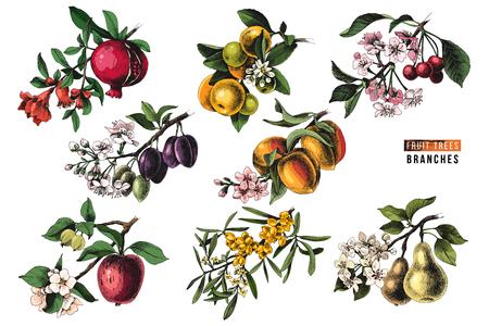 Gałęzie drzew owocowych - granatu, mandarynki, wiśni, śliwki, brzoskwini, jabłoni, rokitnika i gruszki - z kwiatami i dojrzałymi owocami. Ilustracja wektorowa