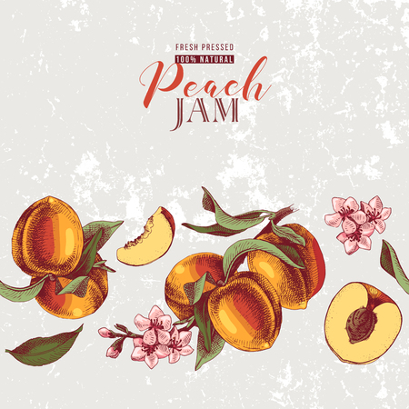 Background with hand drawn peach seamless border in vintage style. Vector illustration