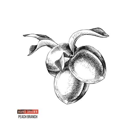 Hand drawn peach fruits