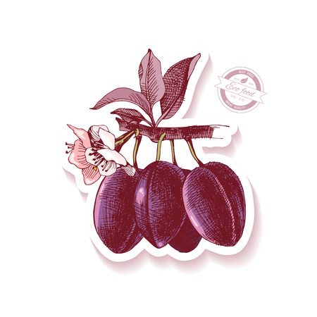 Sticker with hand drawn plum branch Banco de Imagens - 115057662