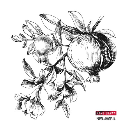 Hand drawn pomegranate branch with flowers and fruits. Vector illustration