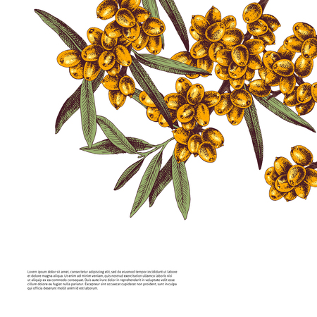 Background with colorful hand drawn sea buckthorn branches. Vector illustration