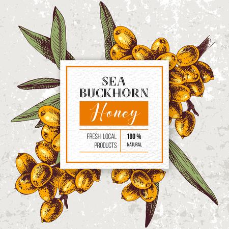 Emblème de miel d'argousier sur des branches d'argousier dessinées à la main. Illustration vectorielle dans un style rétro