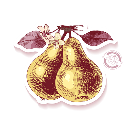 Sticker with hand drawn pear branch