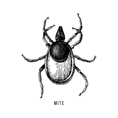 Hand drawn wood tick Stock Illustratie
