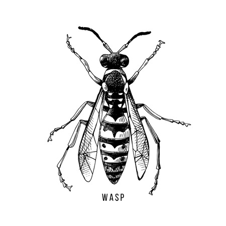 Hand drawn wasp illustration Stock Illustratie