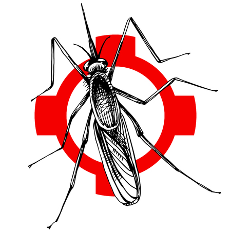 Hand drawn mosquito on crosshatch. Vector illustration