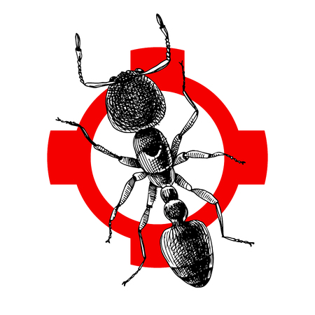 Hand drawn ant illustration on crosshatch