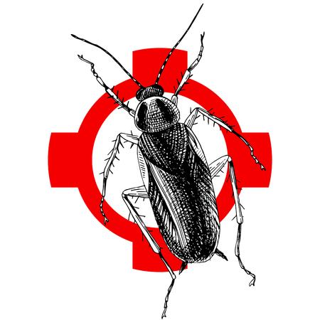 Cucaracha dibujada a mano en rayado cruzado