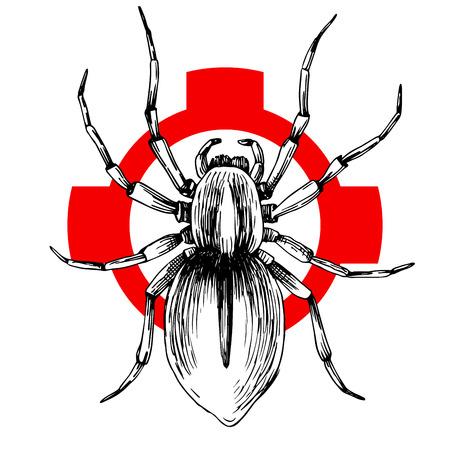 Hand drawn Brazilian spider on crosshatch. Vector illustration