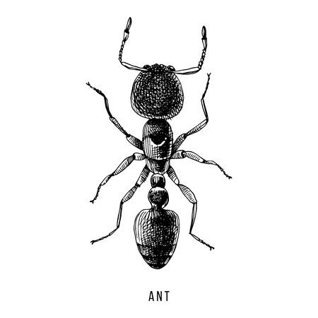 Ilustración de hormiga dibujada a mano