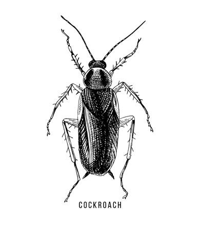 Hand getekende kakkerlak illustratie