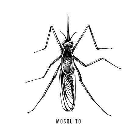 Hand drawn mosquito Stock Illustratie