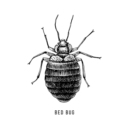 Hand drawn bed bug