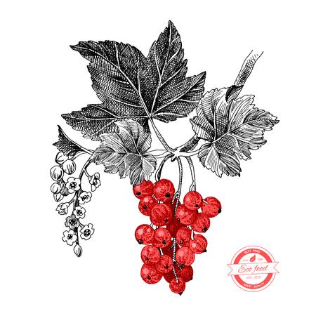 Handgezeichneter roter Johannisbeerzweig mit Blättern und Blumen. Vektor-Illustration Vektorgrafik