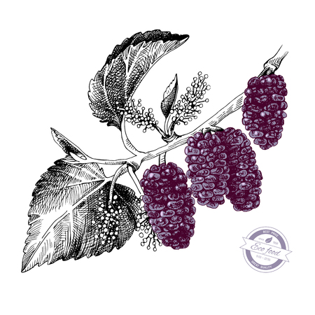 Hand drawn mulberry branch with flowers and ripe berries. Vector illustration