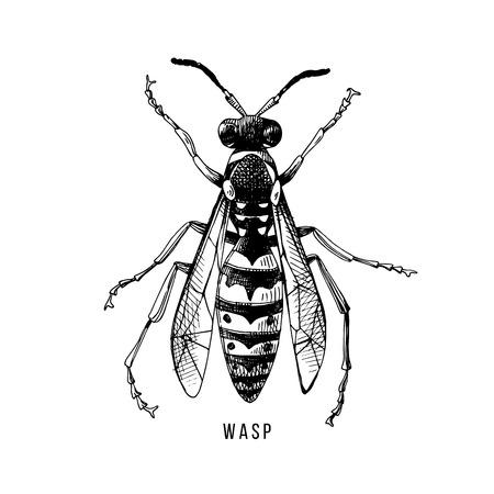 Hand drawn wasp illustration  イラスト・ベクター素材
