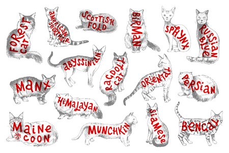 16 hand drawn cat breeds with lettering. Vector illustration