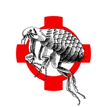 Hand drawn flea on crosshatch. Vector illustration
