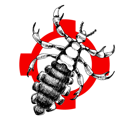 Hand drawn louse on crosshatch. Vector illustration