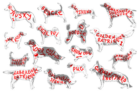Breeds of dogs with lettering Illustration