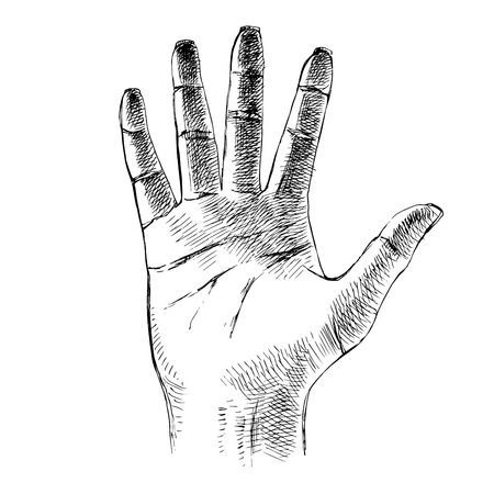 Sketched palm hand gesture. Vector illustration Vectores