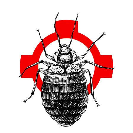 Hand drawn bed bug on crosshatch
