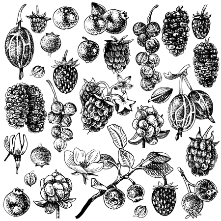 Large set of black and white hand drawn berries. Vector illustration