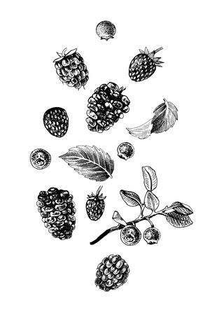 Handgezeichnete Beeren auf Weiß