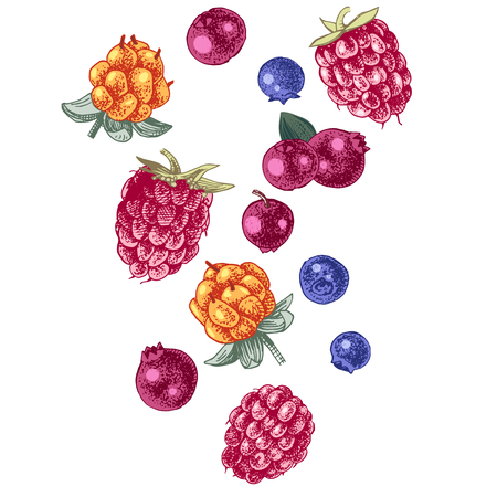 Background with falling berries - raspberry, blueberry, cloudberries and cowberry. Hand drawn vector illustration Illustration