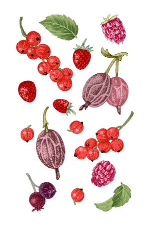 Background with hand drawn berries - raspberry, red currant, gooseberry, wild strawberry, shadberry and mint leaves. Vector illustration
