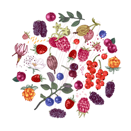 Circle composition with different types of hand drawn berries. Vector illustration