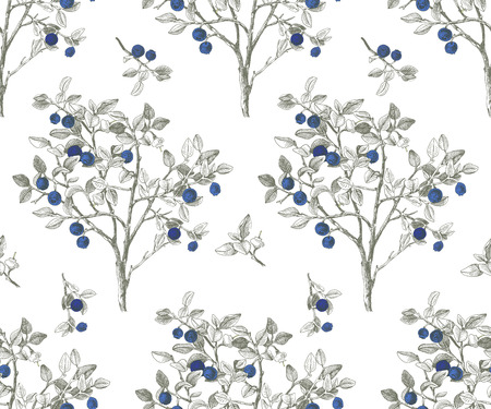 Seamless pattrn with blueberry bushes Ilustrace