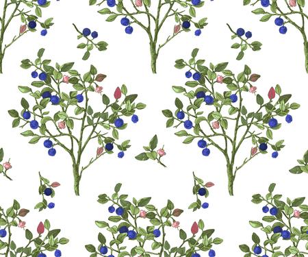 Seamless pattrn with blueberry bushes Ilustración de vector
